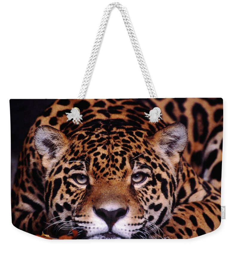 Latin America Weekender Tote Bag featuring the photograph Portrait Of Jaguar, Brazil by Mark Newman