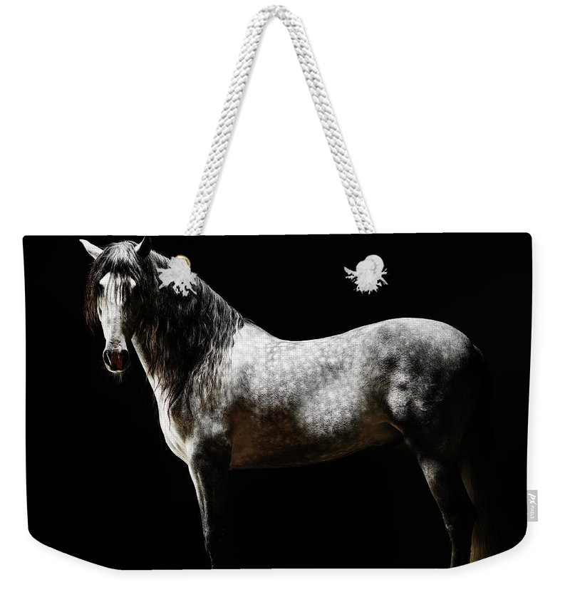 Horse Weekender Tote Bag featuring the photograph Portrait Of Standing Grey Horse by Henrik Sorensen