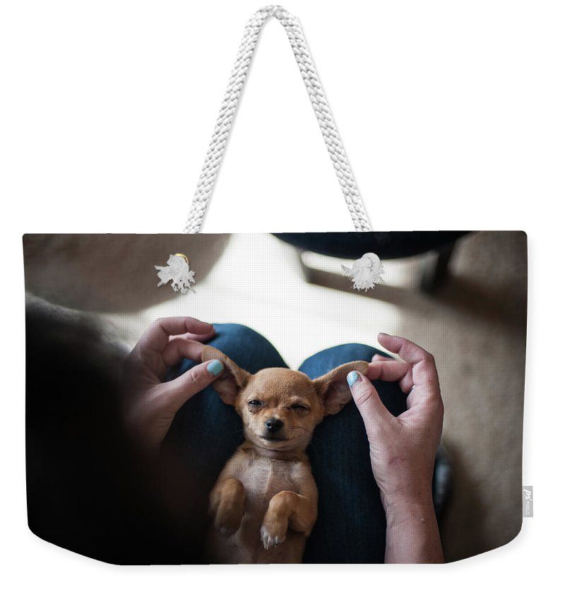 Pets Weekender Tote Bag featuring the photograph Pov - Pets by Jono Winnel