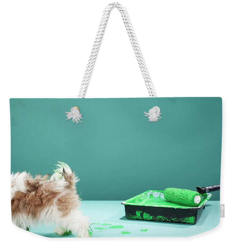 Pets Weekender Tote Bag featuring the photograph Puppy Making Green Paw Prints From by Martin Poole