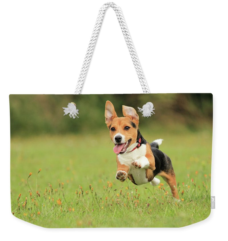 Grass Weekender Tote Bag featuring the photograph Puppy by Paul Baggaley