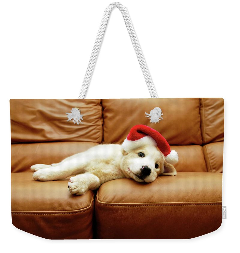 Pets Weekender Tote Bag featuring the photograph Puppy Wears A Christmas Hat, Lounges On by Karina Santos