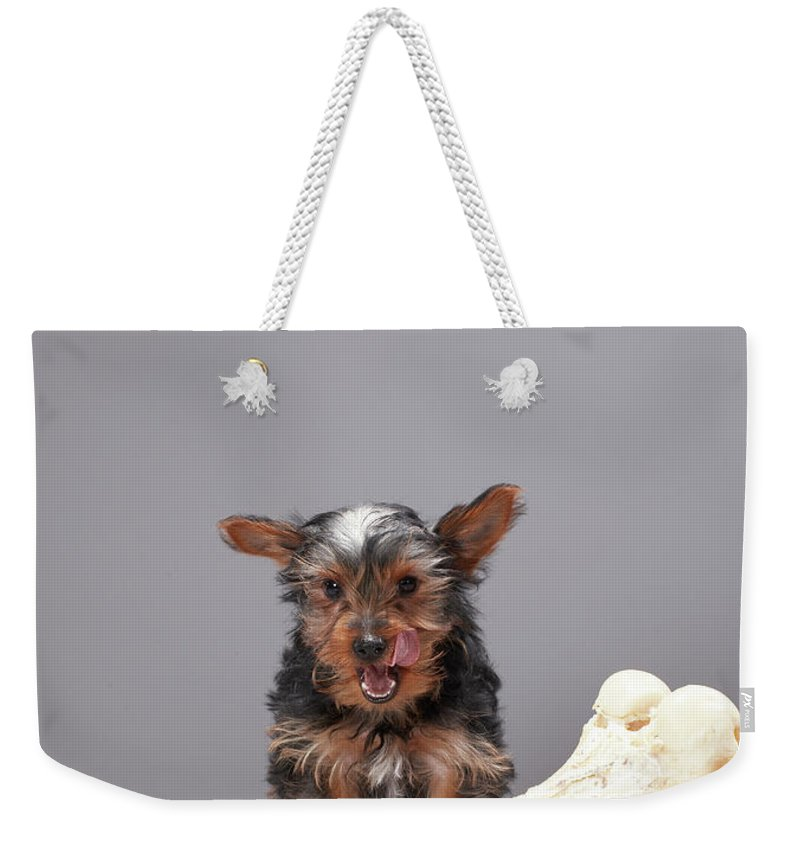 Pets Weekender Tote Bag featuring the photograph Puppy With Oversized Bone by Martin Poole