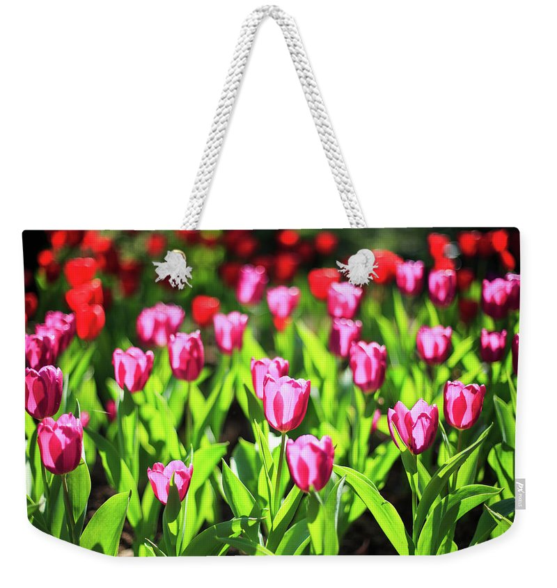 Taiwan Weekender Tote Bag featuring the photograph Purple And Red Tulips Under Sun Light by Samyaoo