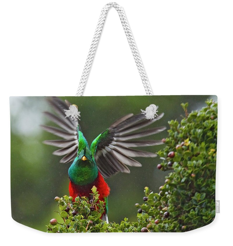 Animal Themes Weekender Tote Bag featuring the photograph Quetzal Taking Flight by Photograph Taken By Nicholas James Mccollum
