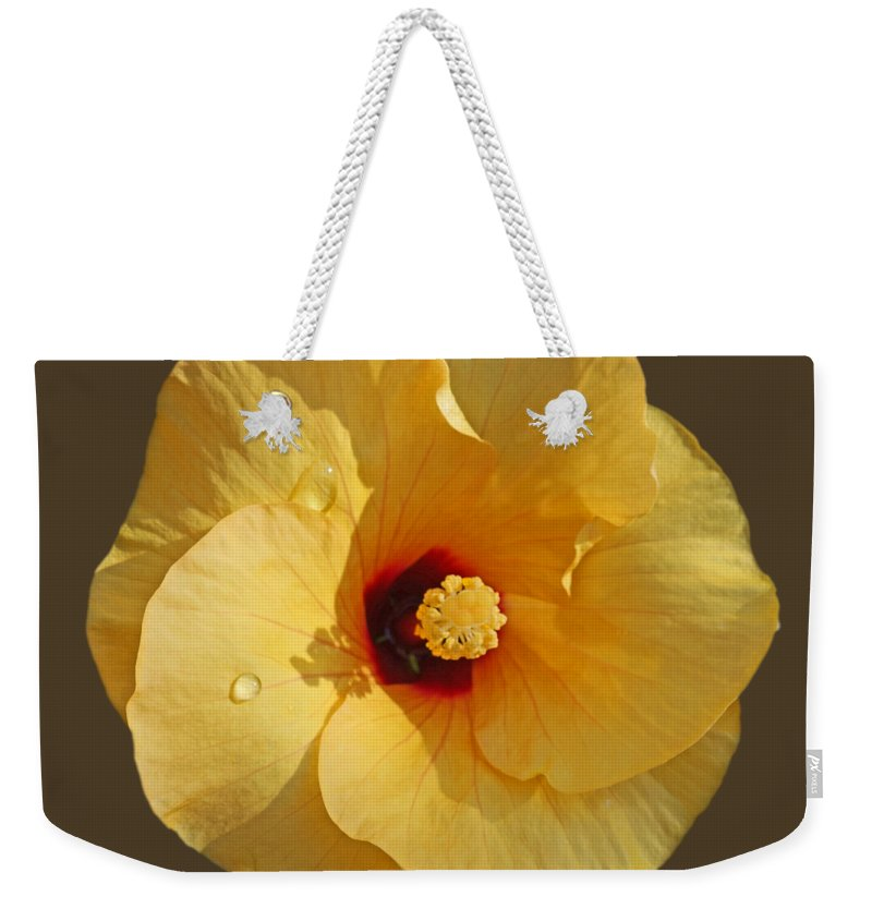 Yellow Hibiscus Bloom Weekender Tote Bag featuring the photograph Rain and Shine by Charles Stuart