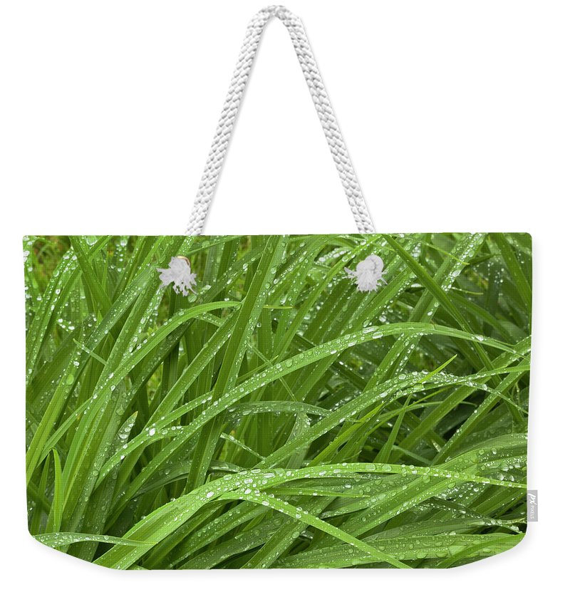 Tranquility Weekender Tote Bag featuring the photograph Raindrops Of Daylily Foliage by Adam Jones