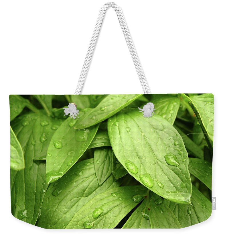 Lifestyles Weekender Tote Bag featuring the photograph Raindrops On Green Leaves by Duncan1890