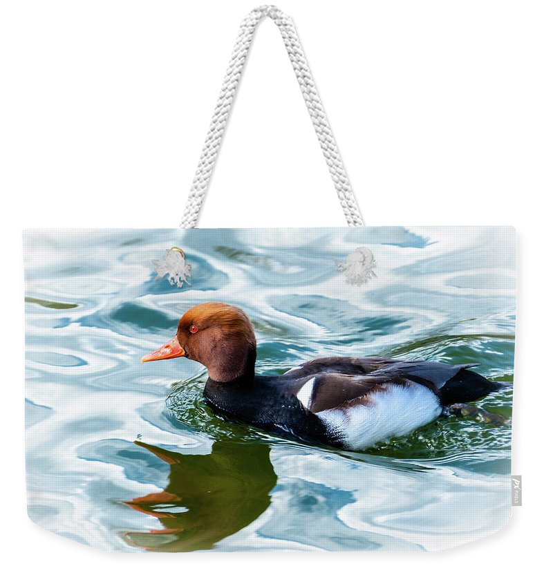 Red Crested Weekender Tote Bag featuring the photograph Red Crested Red Beak Red Eye Duck by Garrick Besterwitch