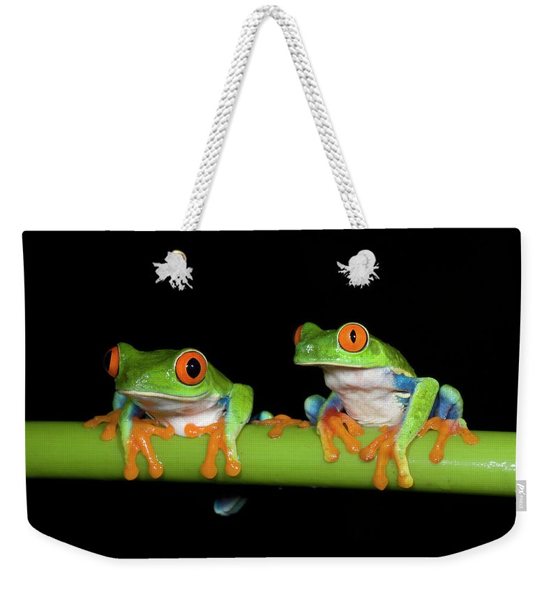 Black Background Weekender Tote Bag featuring the photograph Red-eyed Tree Frogs Agalychnis by Kevin Schafer