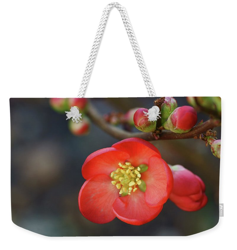 Bud Weekender Tote Bag featuring the photograph Red Flowering Quince by Picture By La-ong