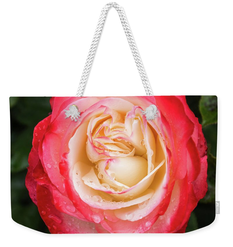 Ice-cream Rose Weekender Tote Bag featuring the photograph Rose And Rain - The Ice-cream Rose by Georgia Mizuleva