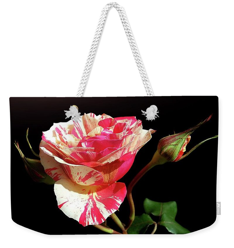 Bud Weekender Tote Bag featuring the photograph Rose With Two Buds by Gitpix