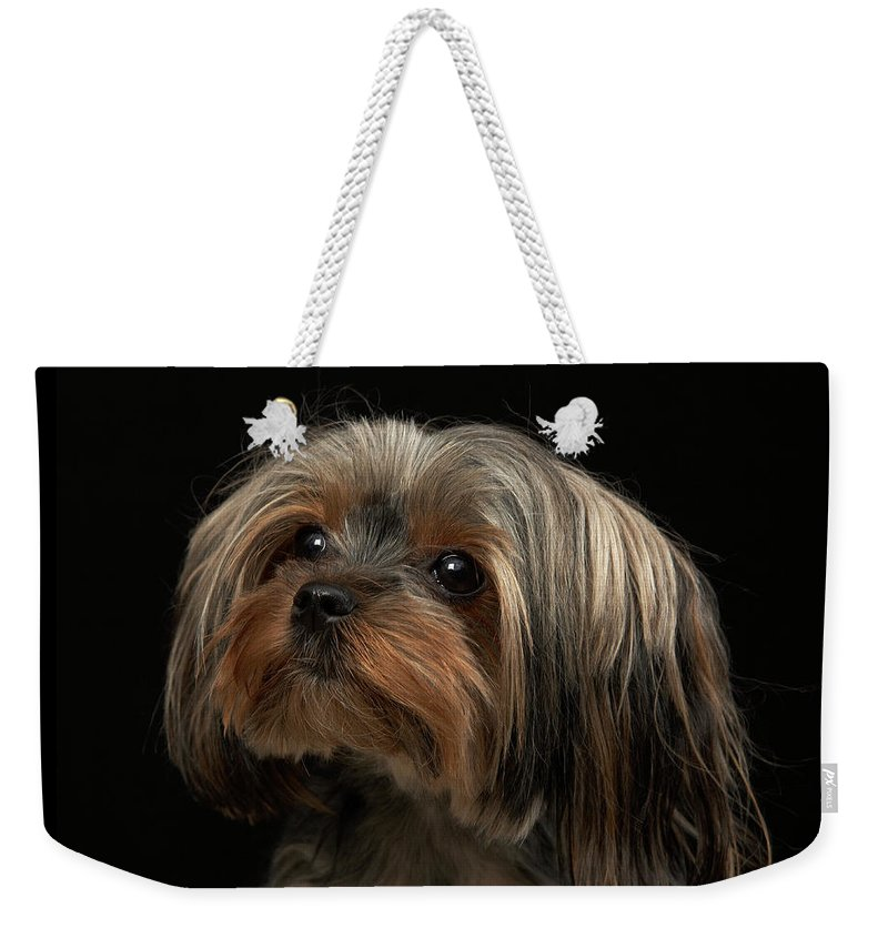 Pets Weekender Tote Bag featuring the photograph Sad Yorking Face Looking To The Left by M Photo