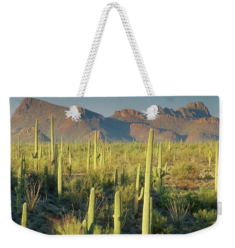 Saguaro Cactus Weekender Tote Bag featuring the photograph Saguaro Cactus In Sonoran Desert And by Kencanning