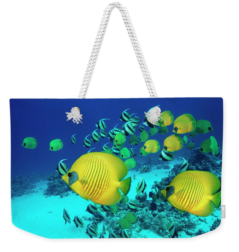 Underwater Weekender Tote Bag featuring the photograph School Of Butterfly Fish Swimming On by Georgette Douwma