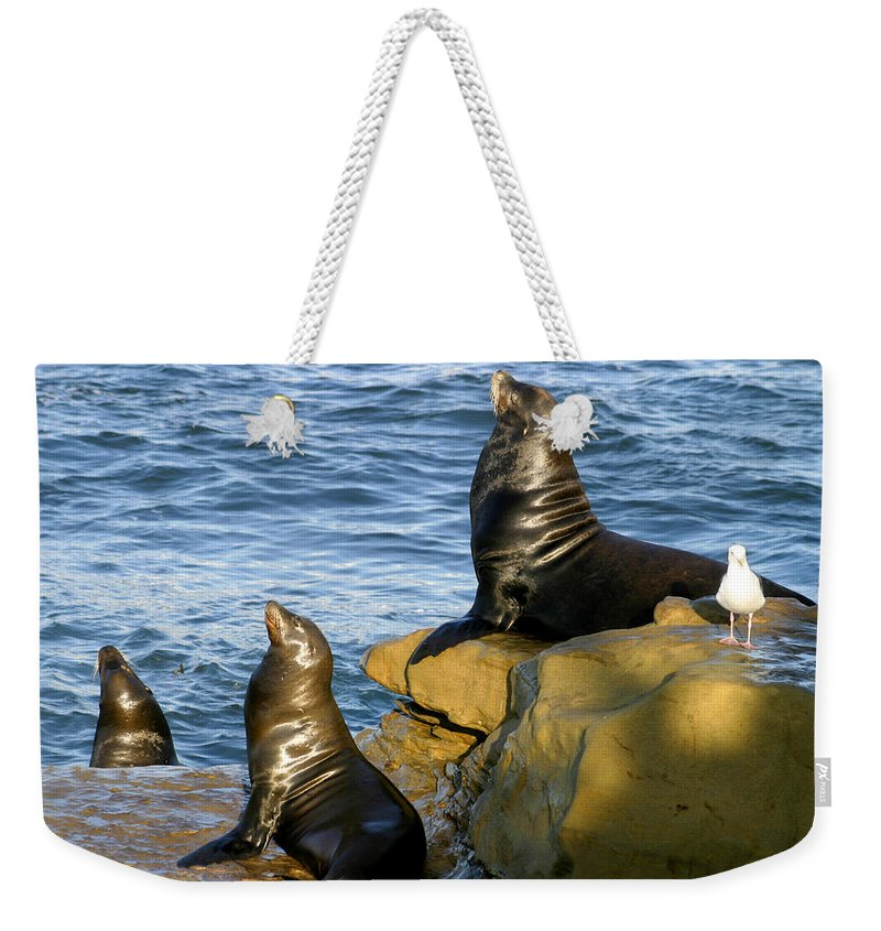 Sea Lions Weekender Tote Bag featuring the photograph Sea Lion Rock by Anthony Jones