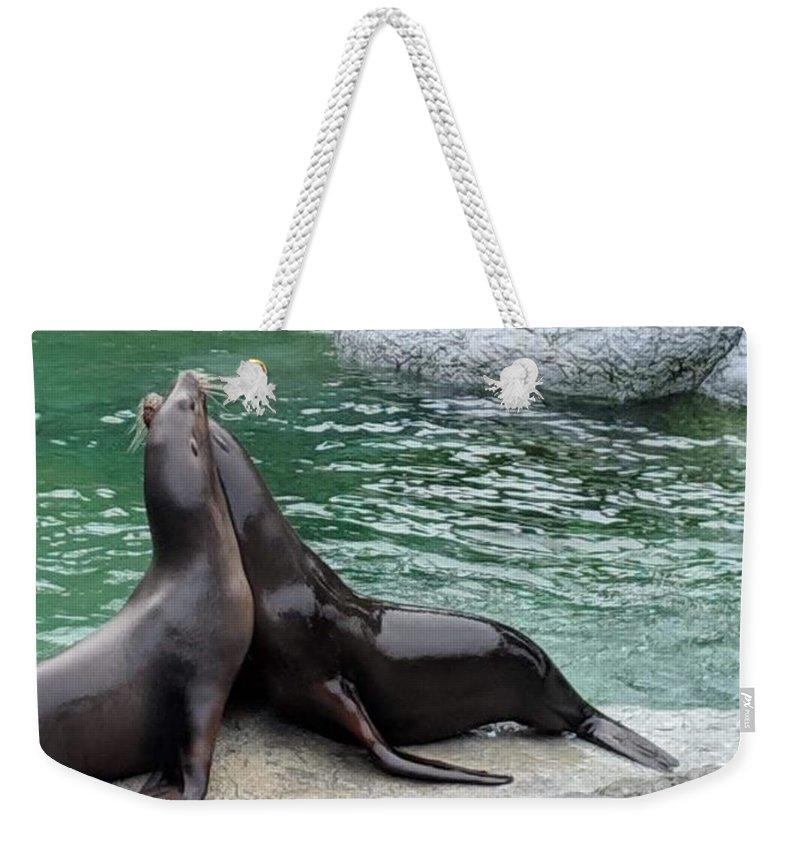 Blue Weekender Tote Bag featuring the photograph Seal by Aswini Moraikat Surendran