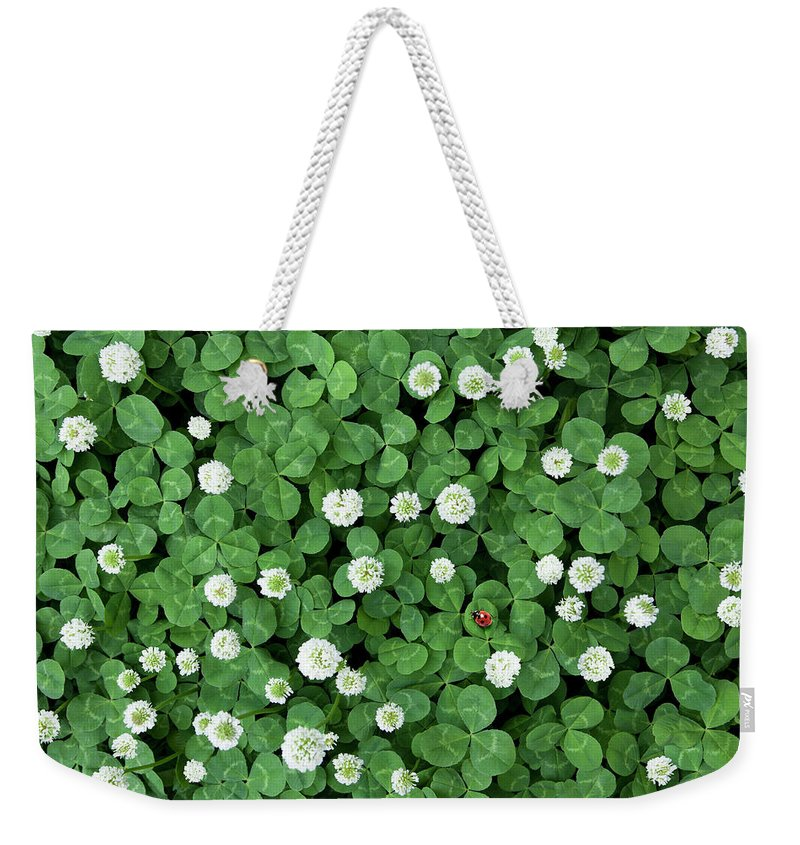 Nagoya Weekender Tote Bag featuring the photograph Seven-spot Ladybird In Clover Field by H&c Studio
