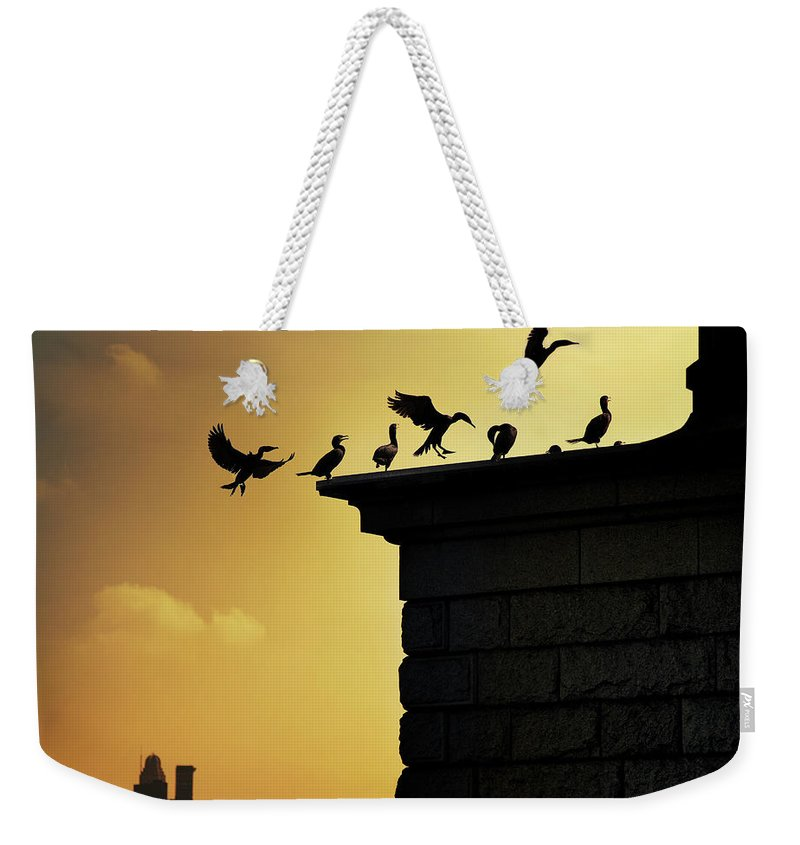 Central Park Weekender Tote Bag featuring the photograph Silhouettes Of Cormorants by Istvan Kadar Photography