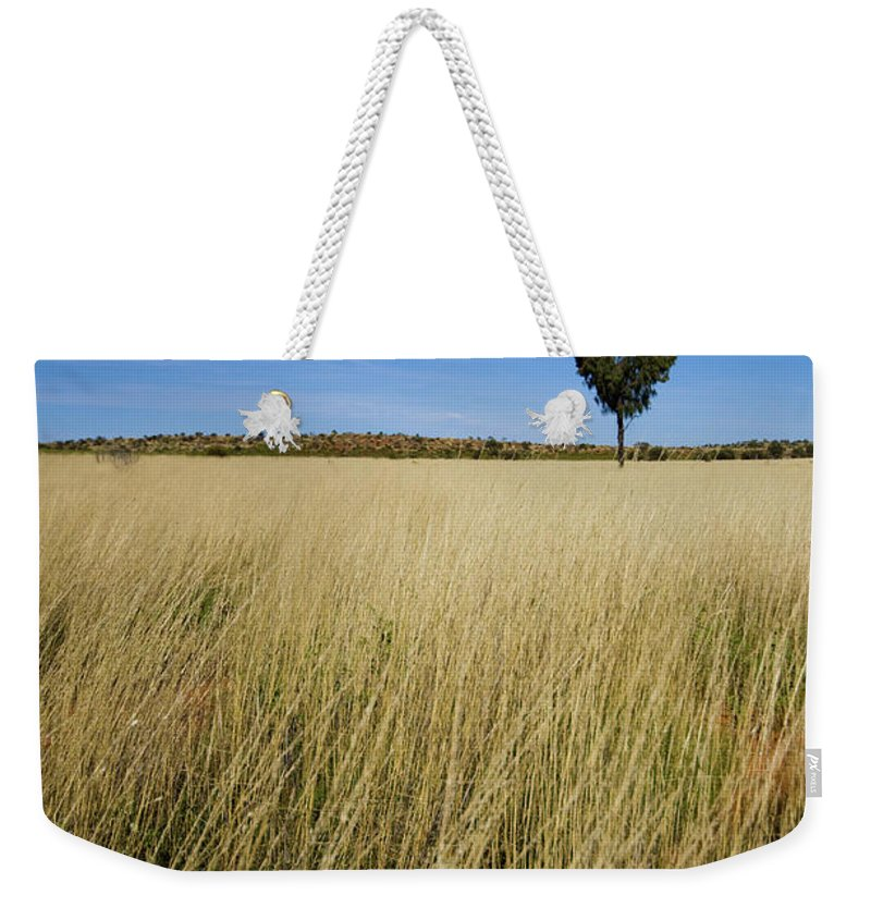 Scenics Weekender Tote Bag featuring the photograph Small Single Tree In Field by Universal Stopping Point Photography