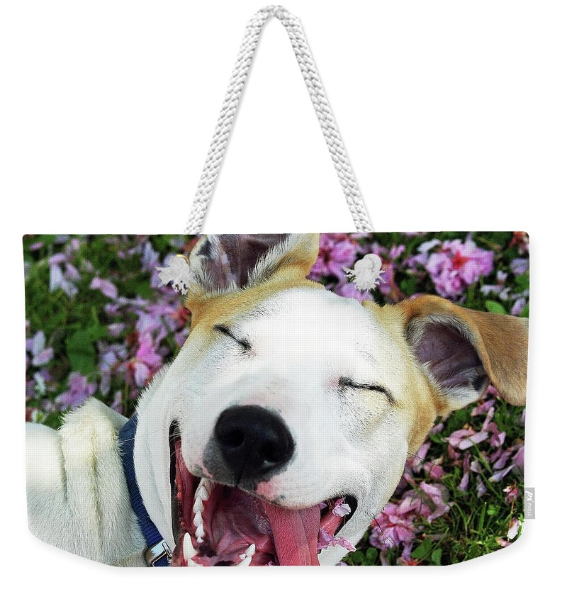 Pets Weekender Tote Bag featuring the photograph Smiling Dog by Fork