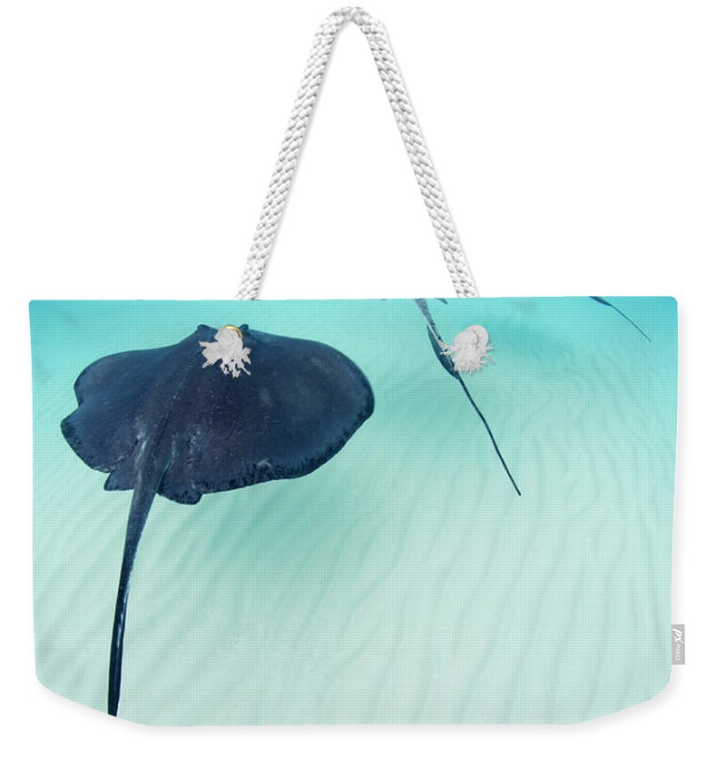 Underwater Weekender Tote Bag featuring the photograph Southern Stingray Cayman Isalnds by Justin Lewis
