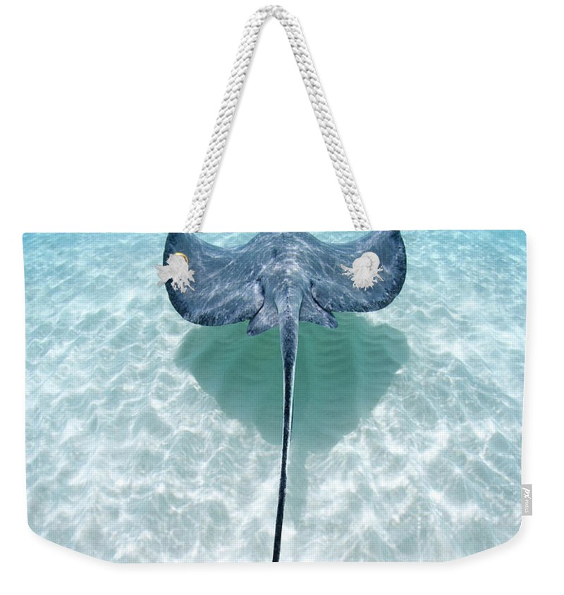 Underwater Weekender Tote Bag featuring the photograph Southern Stingray Cayman Islands by Justin Lewis