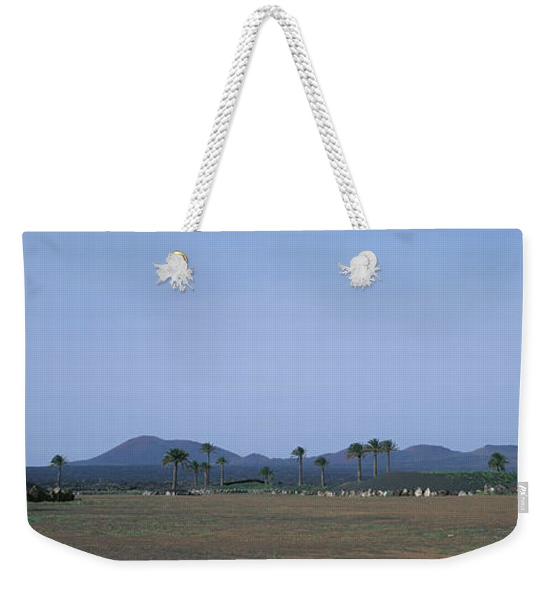 Timanfaya National Park Weekender Tote Bag featuring the photograph Spain, Canary Islands, Lanzarote, Palm by Martial Colomb