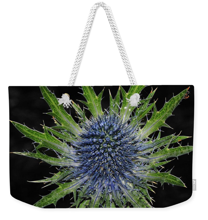 Insect Weekender Tote Bag featuring the photograph Spider by Love Photography