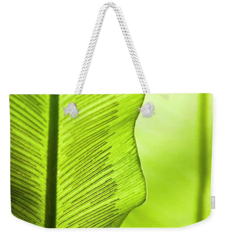 Outdoors Weekender Tote Bag featuring the photograph Spores Of A Fern by By Ken Ilio