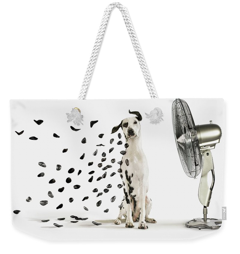 Pets Weekender Tote Bag featuring the photograph Spots Flying Off Dalmation Dog by Gandee Vasan