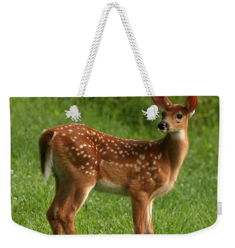 Grass Weekender Tote Bag featuring the photograph Spotted Fawn by Spiraling Road Photography
