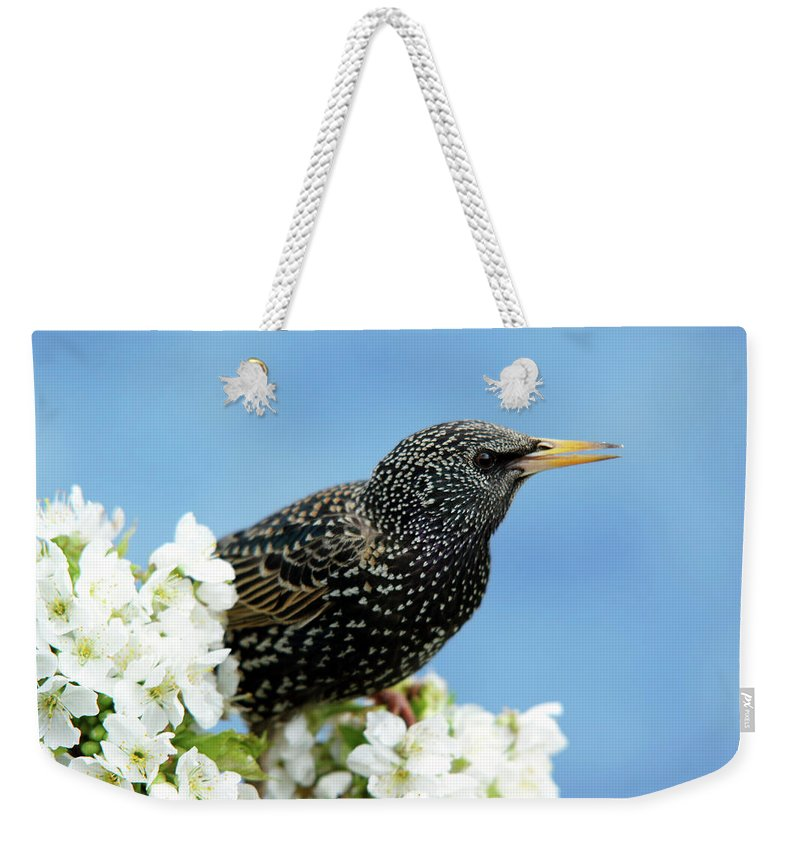 Songbird Weekender Tote Bag featuring the photograph Star In Springtime by Schnuddel