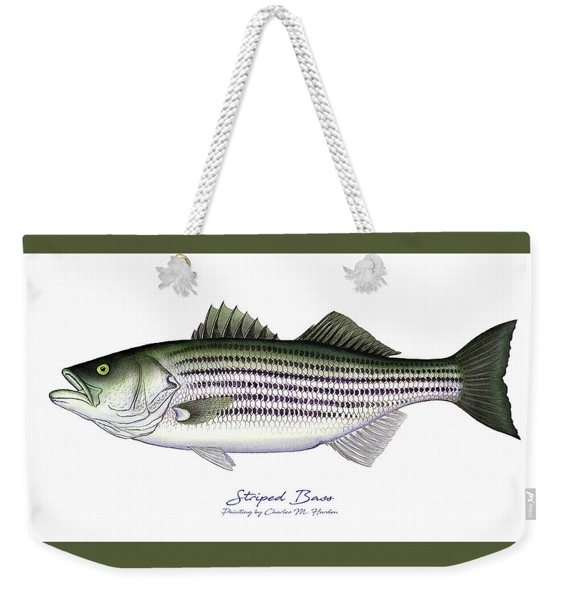 Designs Similar to Striped Bass by Charles Harden