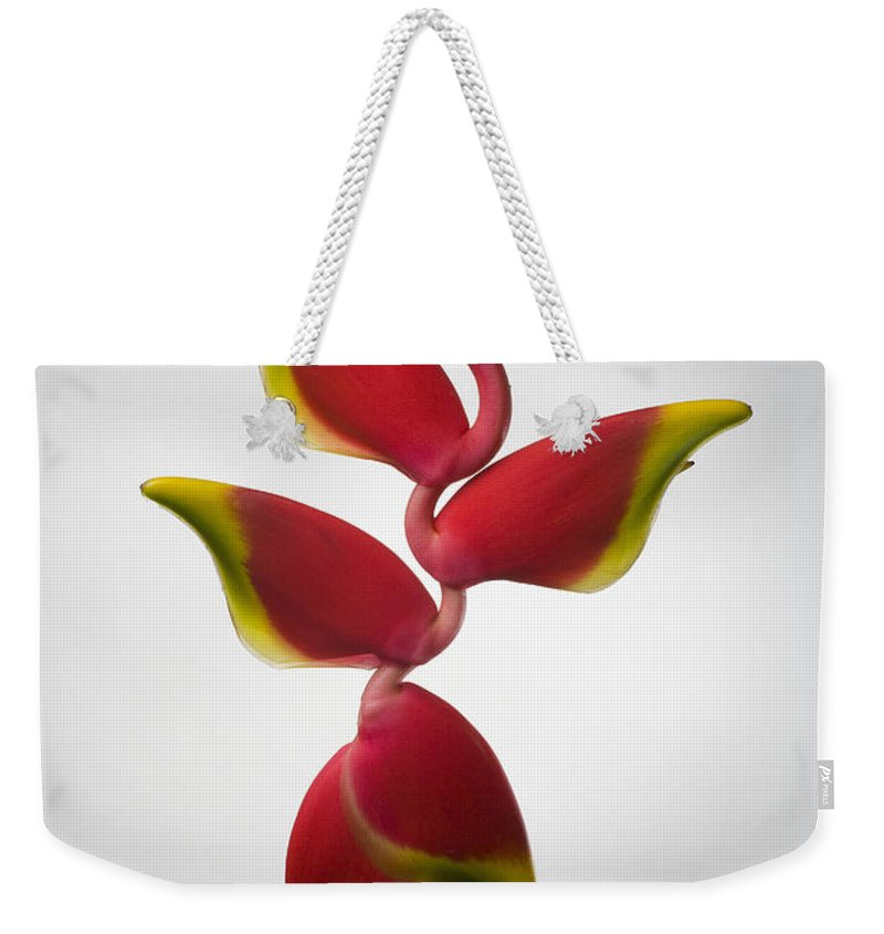 Hanging Weekender Tote Bag featuring the photograph Studio Shot Of Hanging Red Lobster Claw by Design Pics/tomas Del Amo