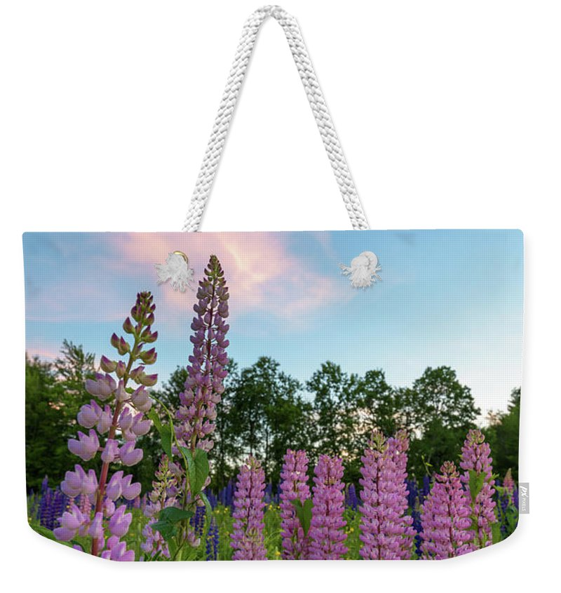 Flowers Weekender Tote Bag featuring the photograph Sugar Hill Lupines by Jesse MacDonald