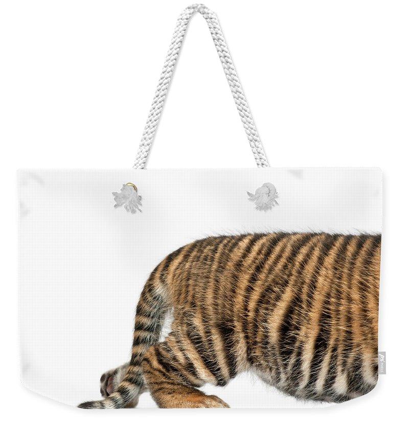 White Background Weekender Tote Bag featuring the photograph Sumatran Tiger Cub - Panthera Tigris by Life On White