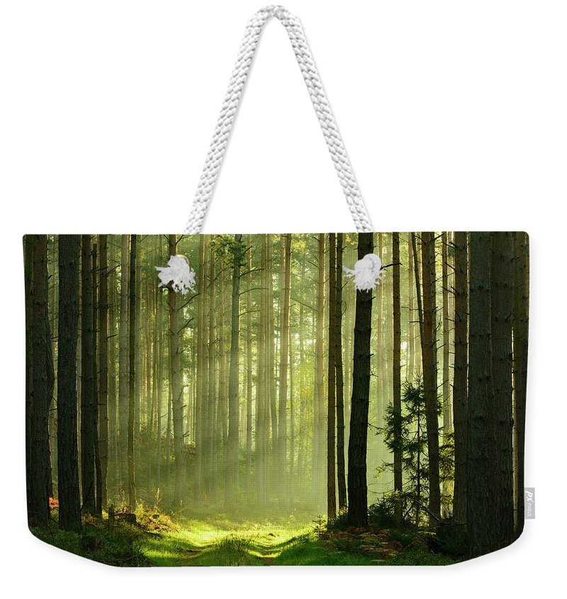Scenics Weekender Tote Bag featuring the photograph Sunbeams Breaking Through Pine Tree by Avtg