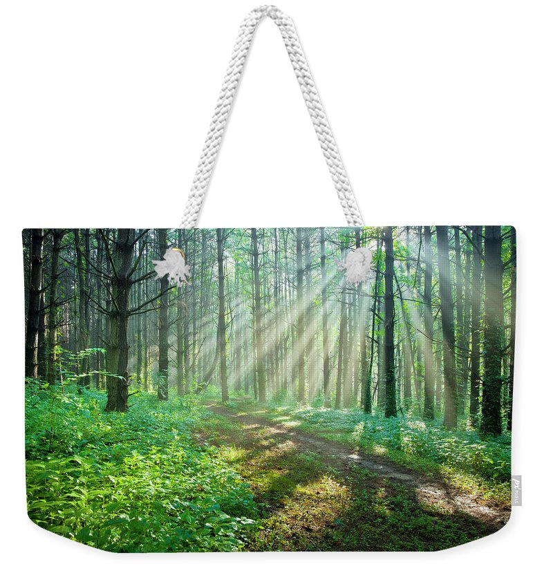 Outdoors Weekender Tote Bag featuring the photograph Sunbeams Filtering Through Trees On A by Drnadig