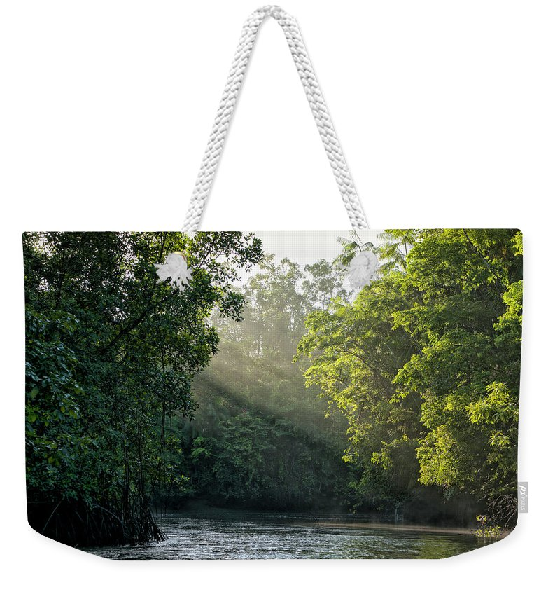 Tropical Rainforest Weekender Tote Bag featuring the photograph Sunlight Shining Through Trees On River by Brasil2