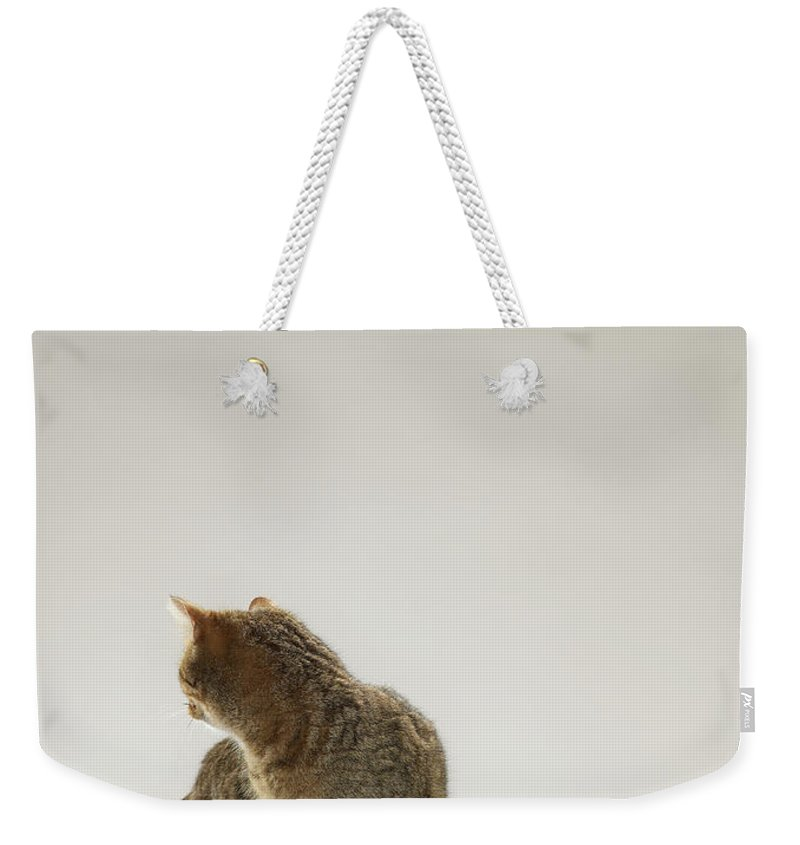 Pets Weekender Tote Bag featuring the photograph Tabby Cat Looking Behind by Michael Blann