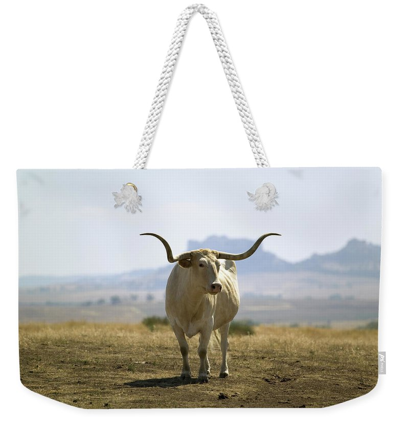 Horned Weekender Tote Bag featuring the photograph Texas Longhorn by Joseph Sohm-visions Of America