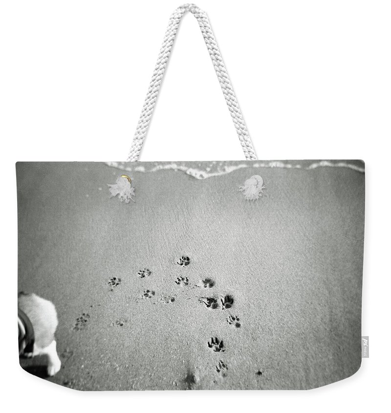 Pets Weekender Tote Bag featuring the photograph The Beach by Moaan