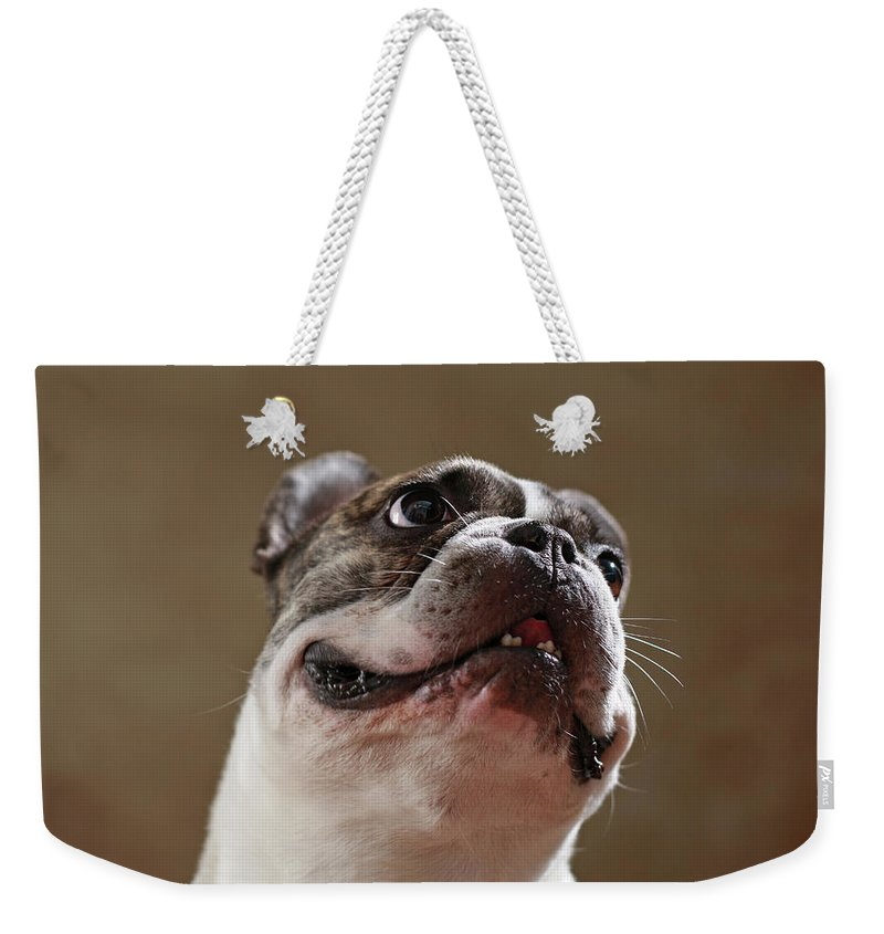 Look Weekender Tote Bag featuring the photograph The Look by Jana Behr