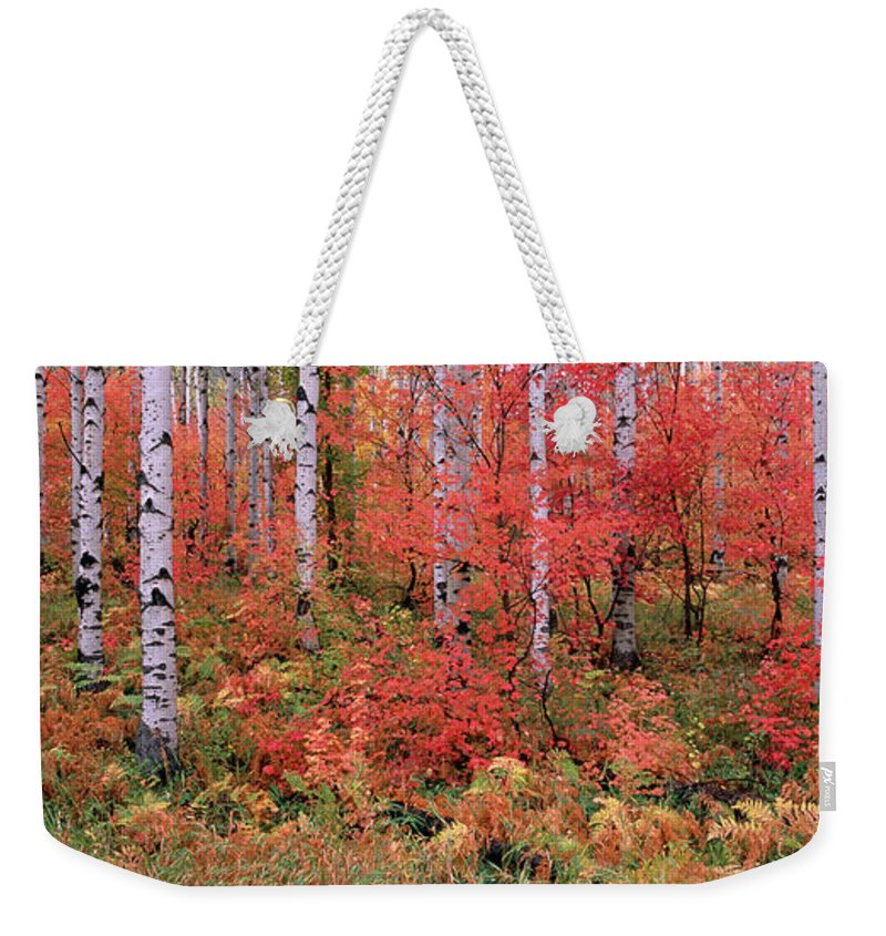 Panoramic Weekender Tote Bag featuring the photograph The Wasatch Mountain Forest Of Maple by Mint Images - David Schultz