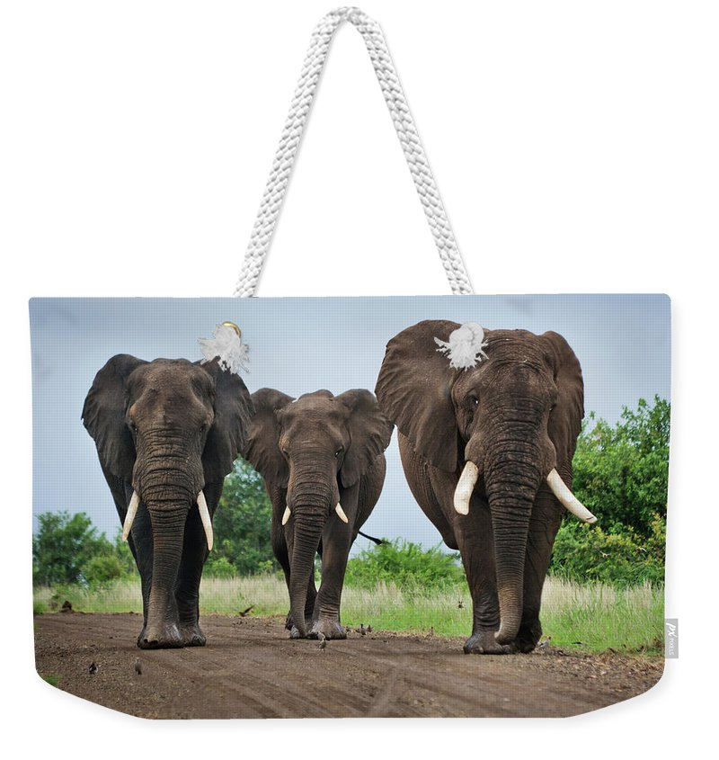 Toughness Weekender Tote Bag featuring the photograph Three Big Elephants On A Dirt Road by Johansjolander