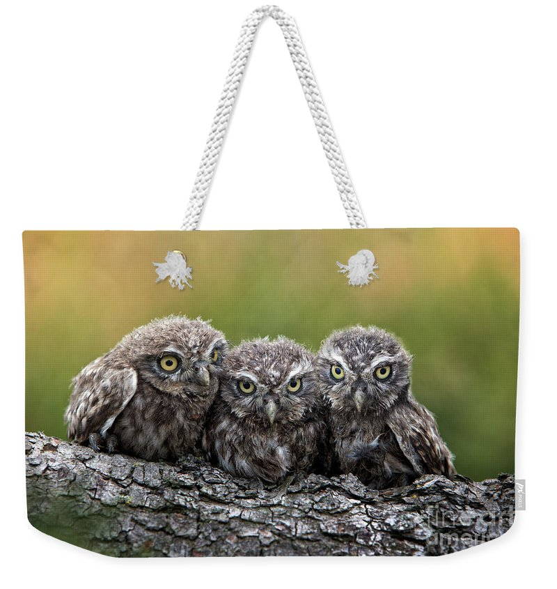 Bird Of Prey Weekender Tote Bag featuring the photograph Three Grimly Goblins by Michael Milfeit