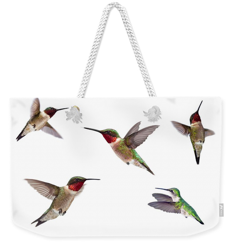 Anna/'s nature gift diaper bag black-chinned ruby-throated 3 hummingbirds blue denim bird lover/'s gift large embroidered tote bag