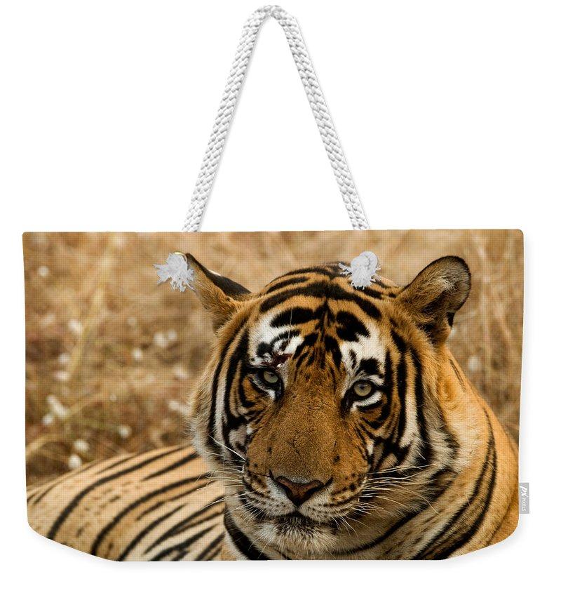 Alertness Weekender Tote Bag featuring the photograph Tiger by Kiran Dikshit